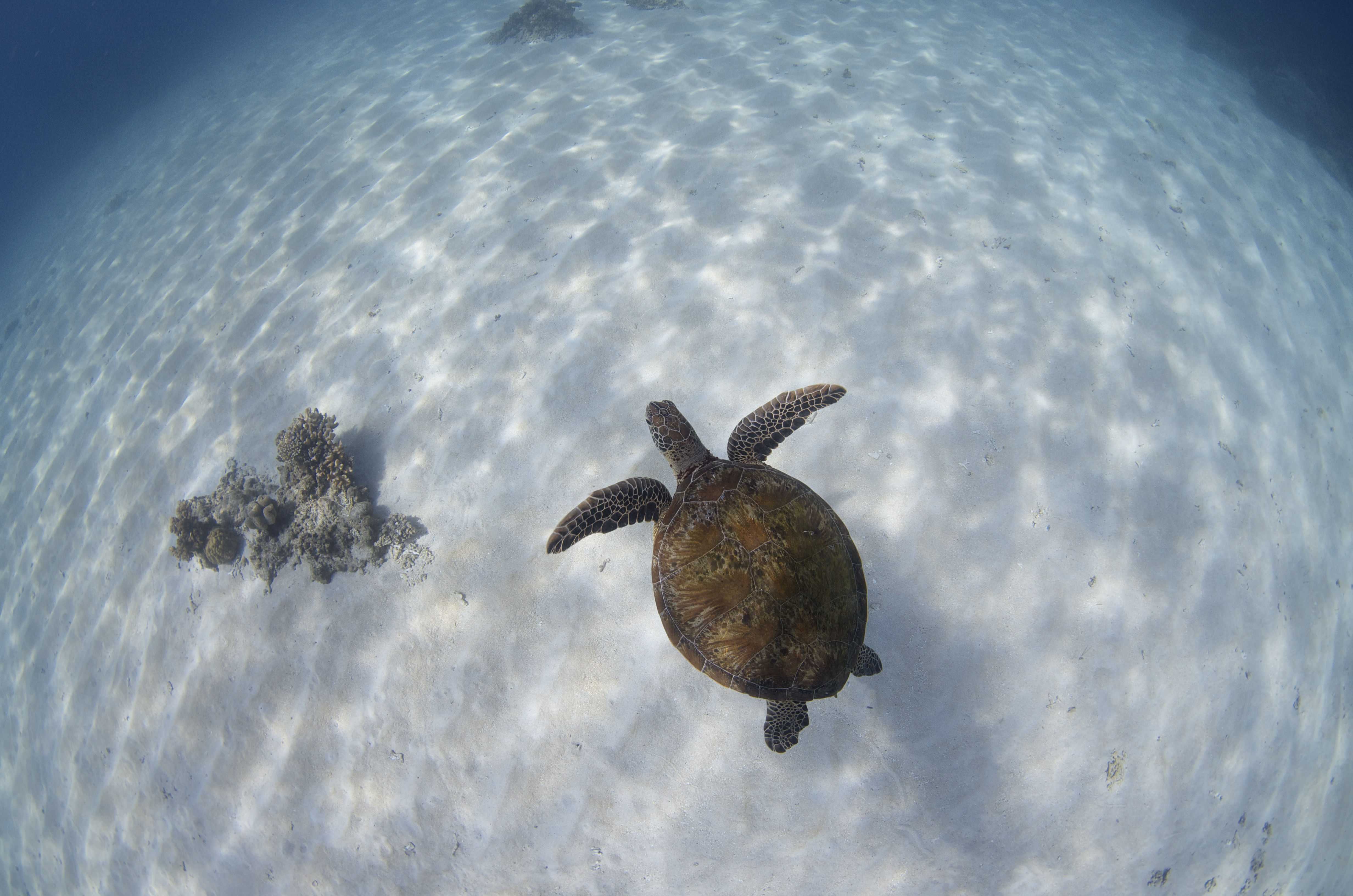 Great Barrier Reef Tour With Deep Sea Divers Den